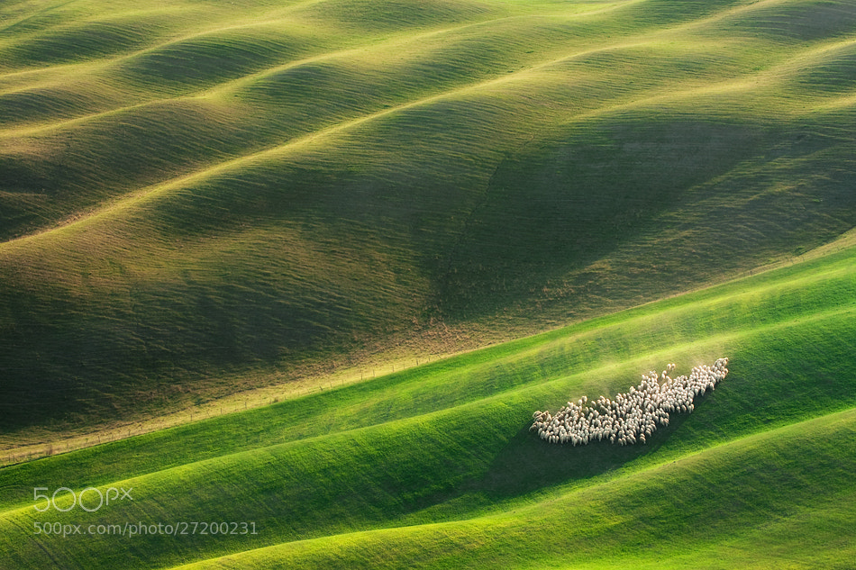 Photograph Afternoon on the pasture by Marcin Sobas on 500px