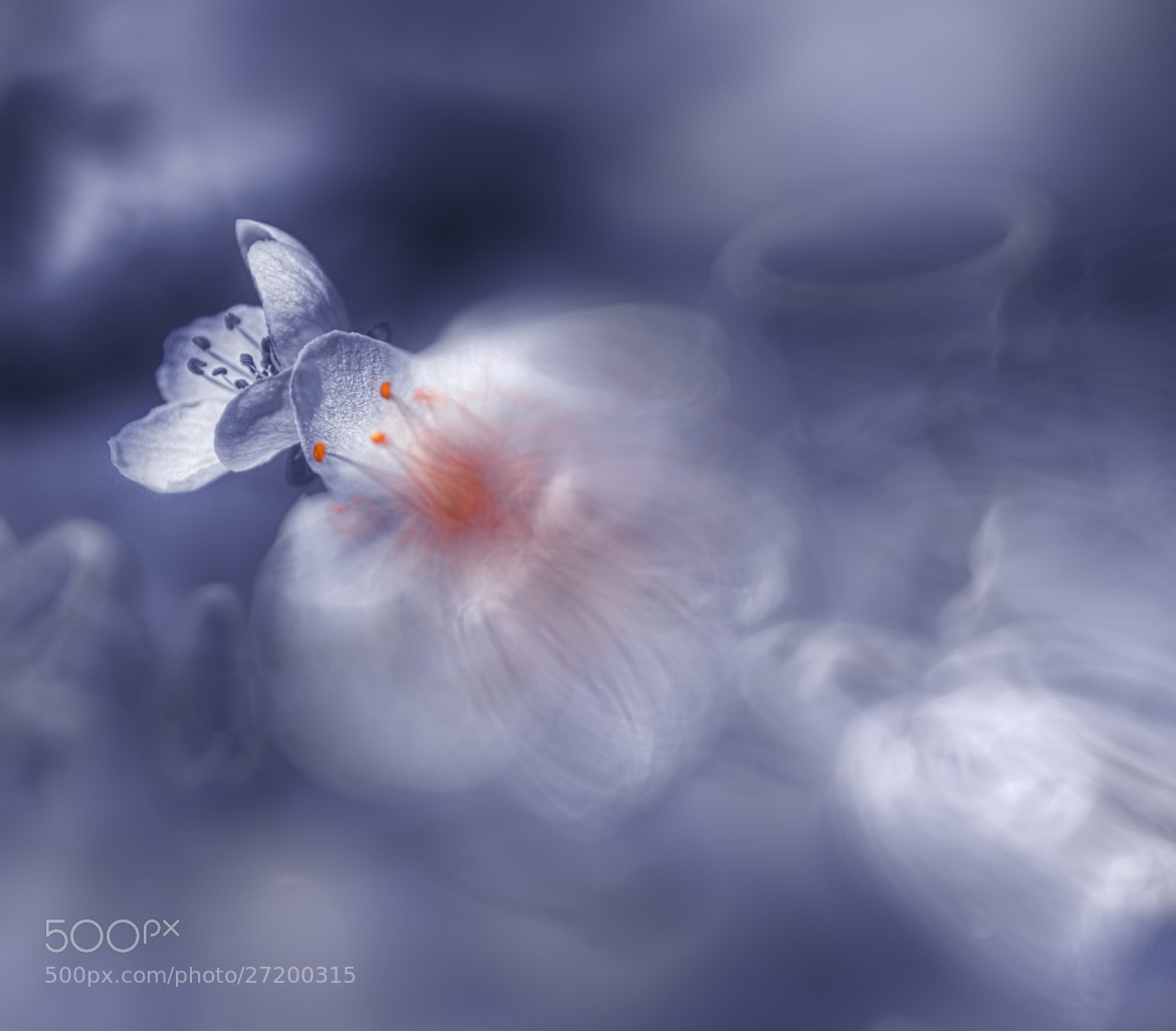 Photograph Unconditional ♥ Love by Josep Sumalla on 500px