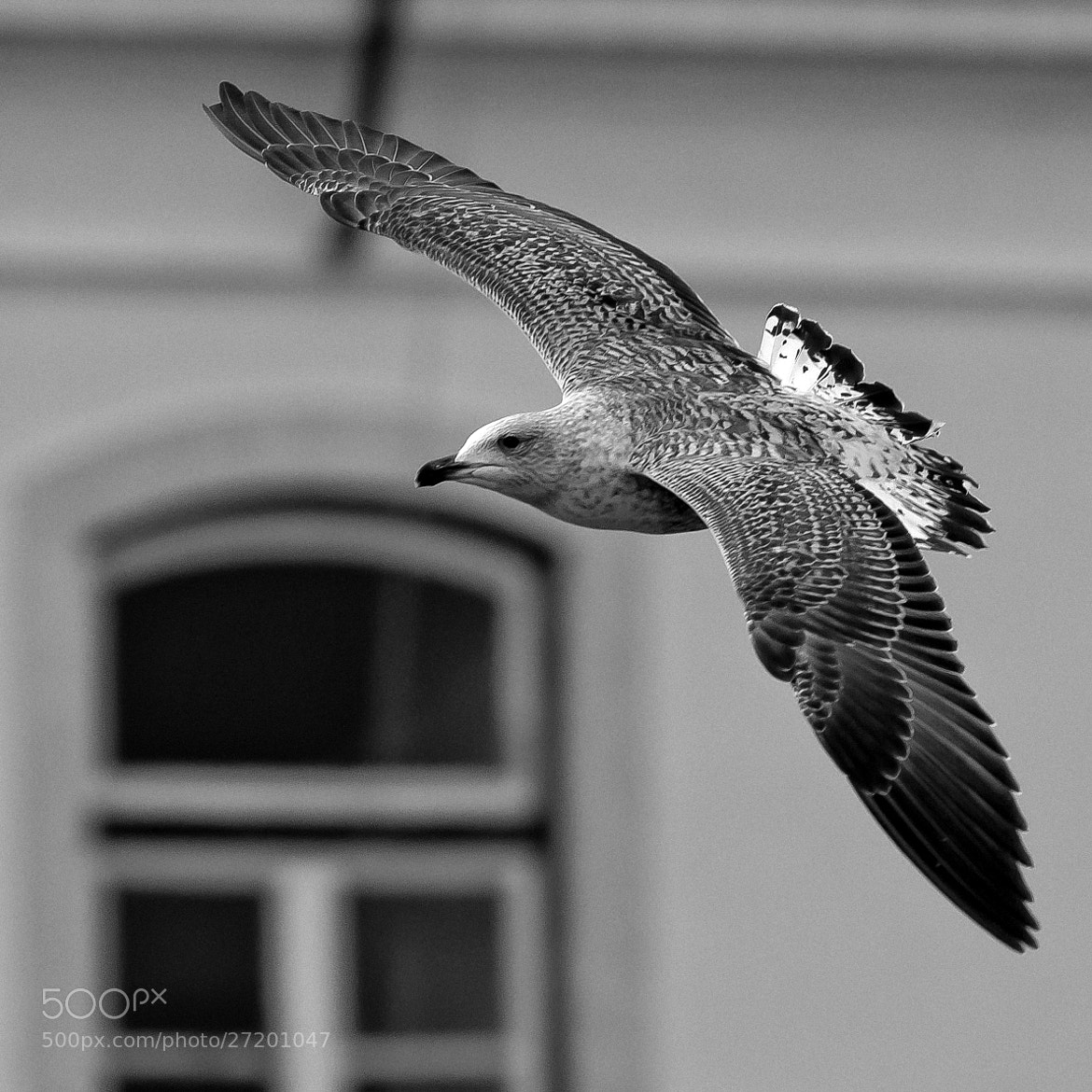 Photograph flying by Daniel Antunes on 500px
