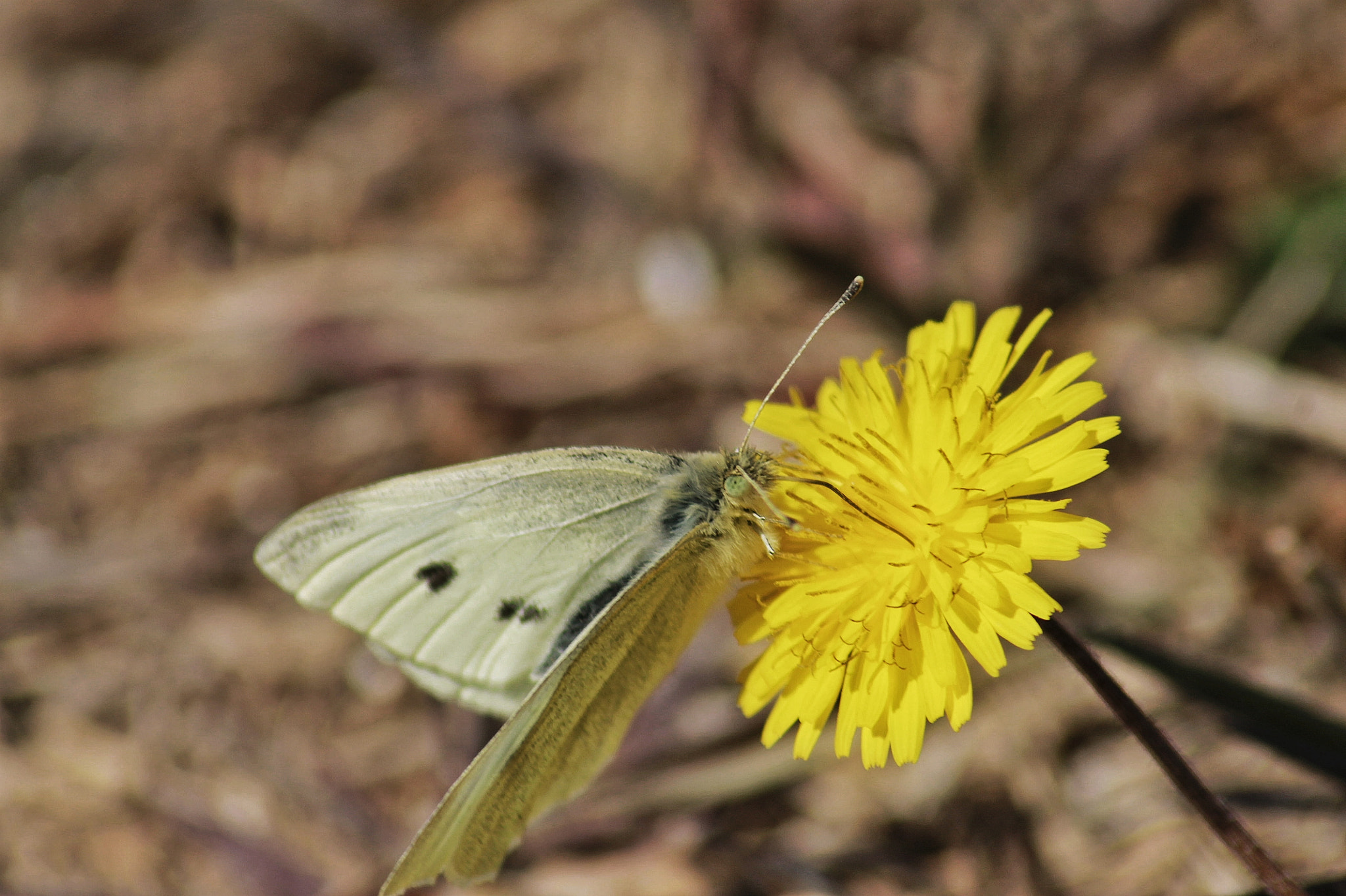 Photograph yellow butterfly by richard cauchy on 500px