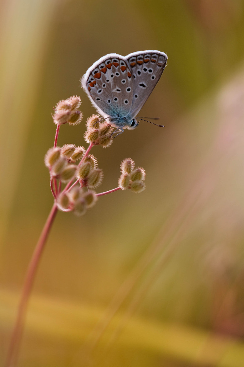 Photograph Simple by Stefano Romanò on 500px