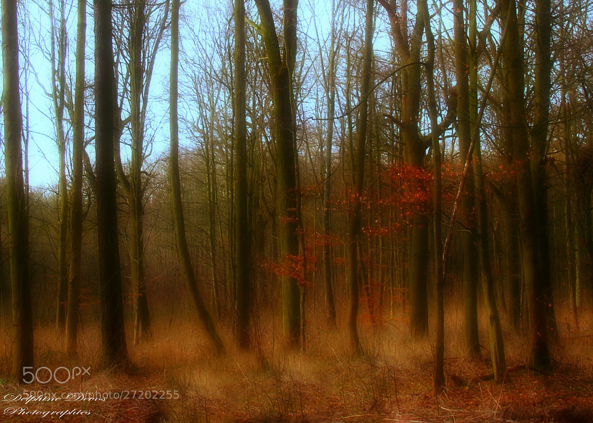 Photograph Forest by Delphine Devos on 500px