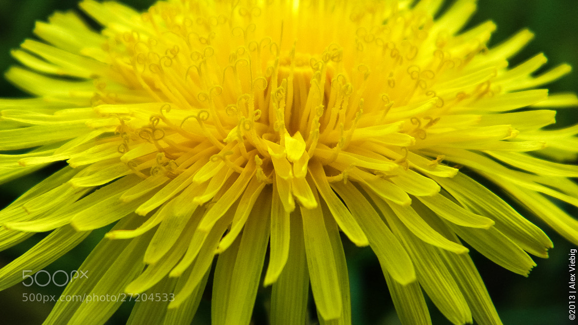 Photograph Some Macro Action by Alex Viebig on 500px