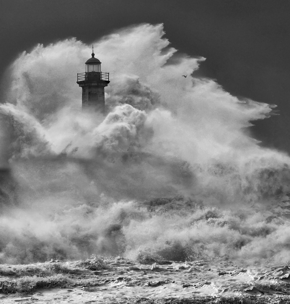 Photograph rage by Veselin Malinov on 500px