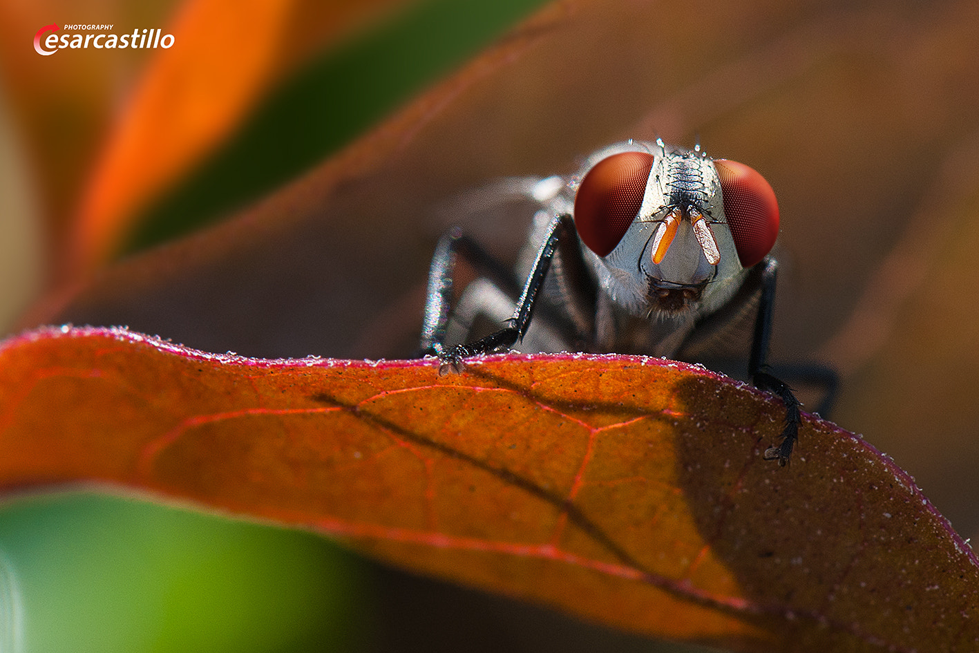 Photograph Ready For Take Off by Cesar Castillo on 500px