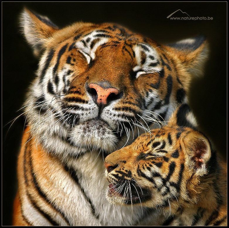 Photograph Mother Love by Monique Bogaerts on 500px