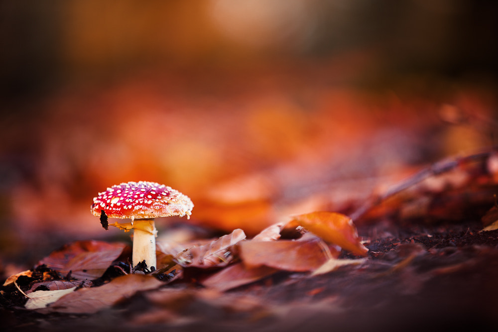 Photograph Fly Agaric by Yannick Beckmann on 500px