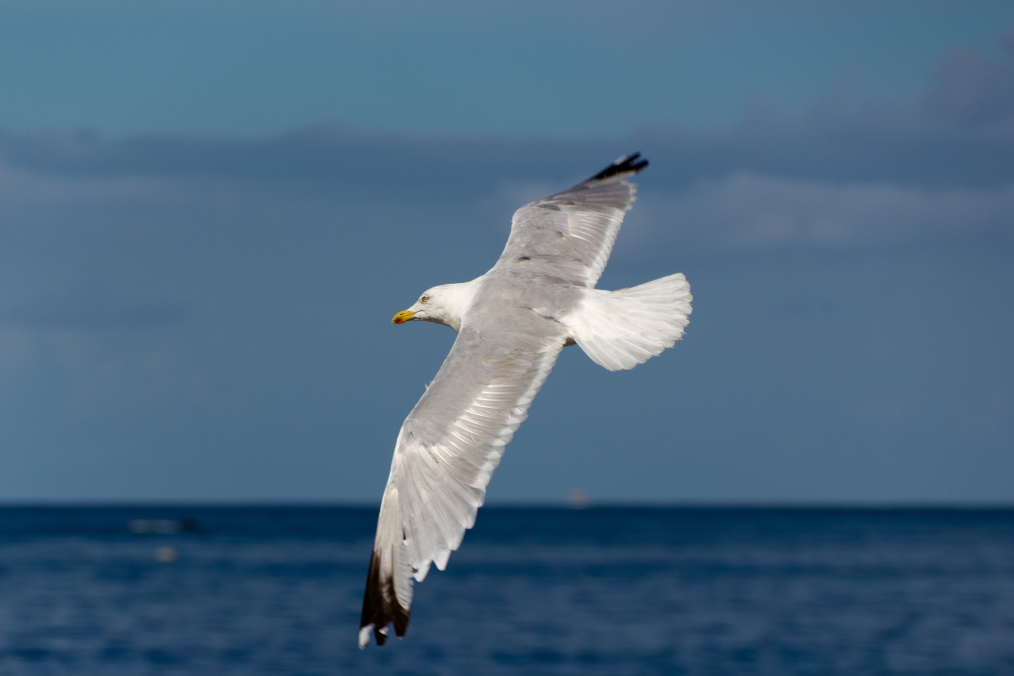 Photograph Seagull / Mouette by Julien LAURENT on 500px