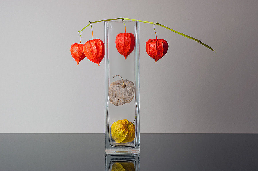 Physalis by Dirk Stolz on 500px.com