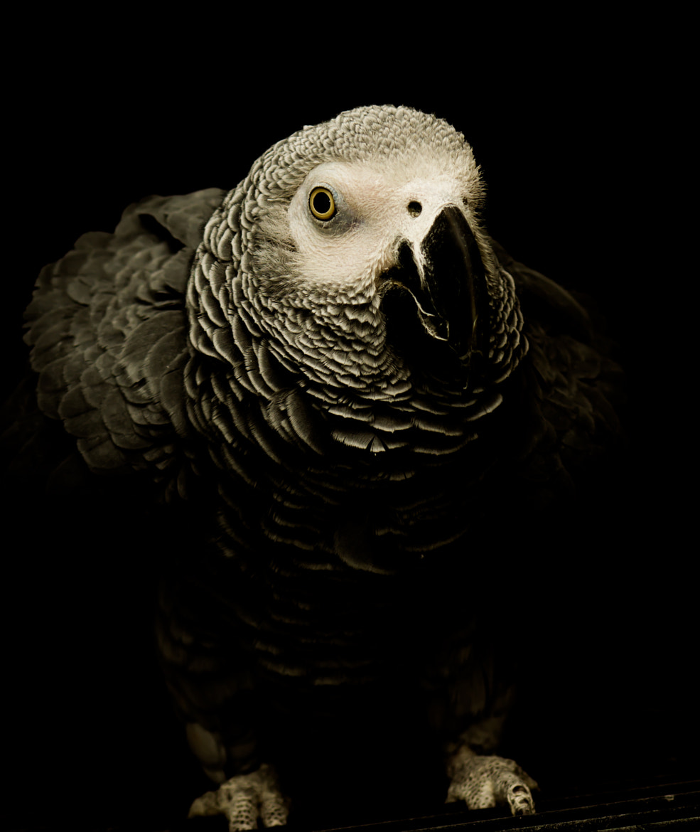 Photograph parrot 2 by jean-noel kern on 500px