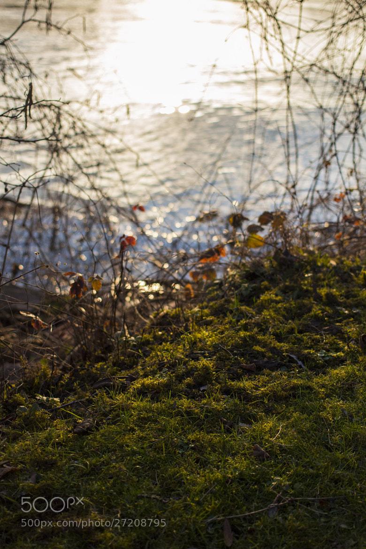 Photograph Grass by Florian Dancourt on 500px