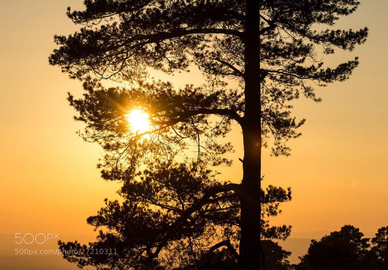 Photograph Orange Sunset! by Dan James on 500px