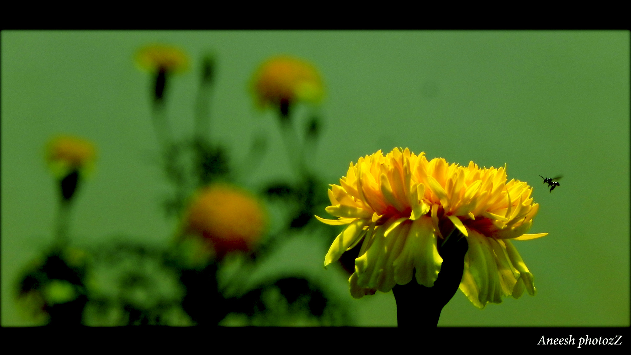 Photograph Thrist of a Bee.... by Aneesh BR on 500px