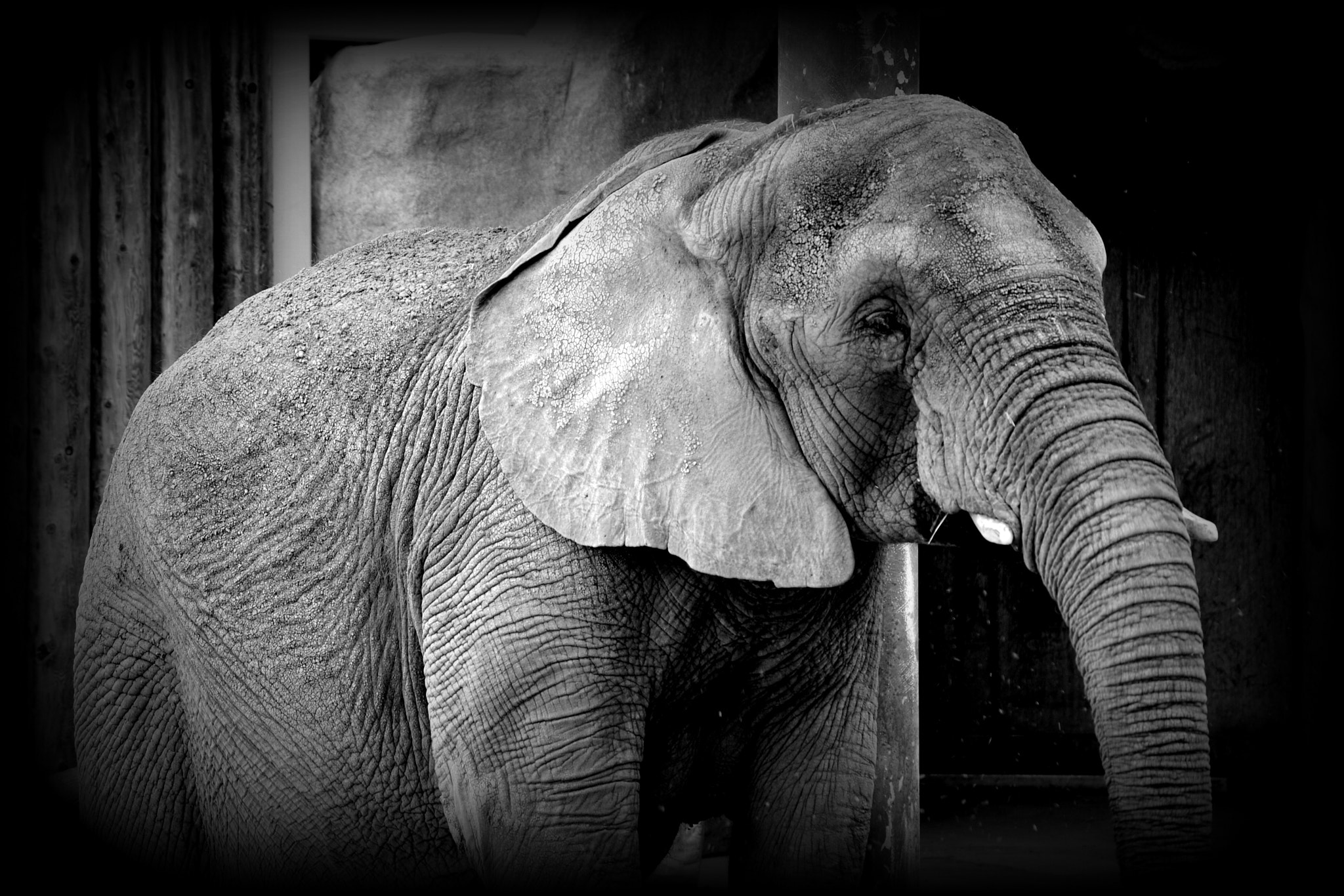Photograph African Elephant by Nate A on 500px