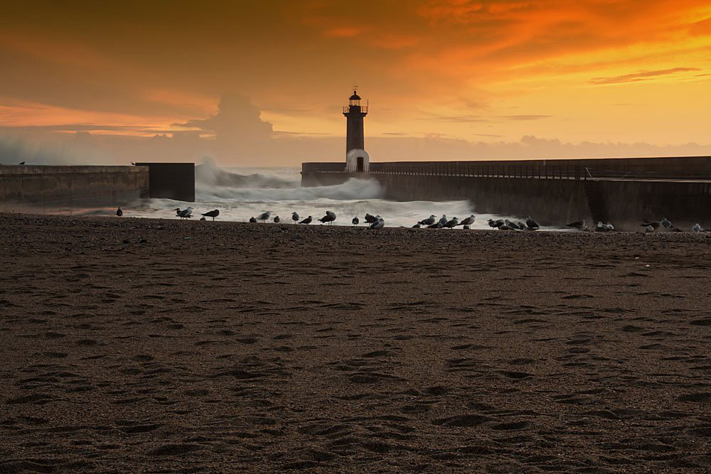Photograph The Birds by Francisco Amaral on 500px