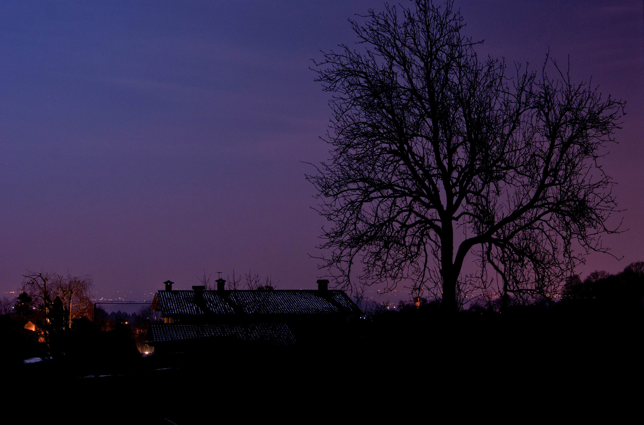 Photograph Dark tree over the city by Luca Pasa on 500px