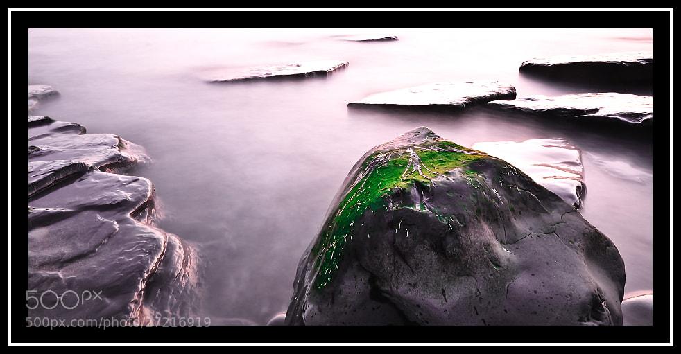 Photograph A green... by Sebastian Grabowski on 500px