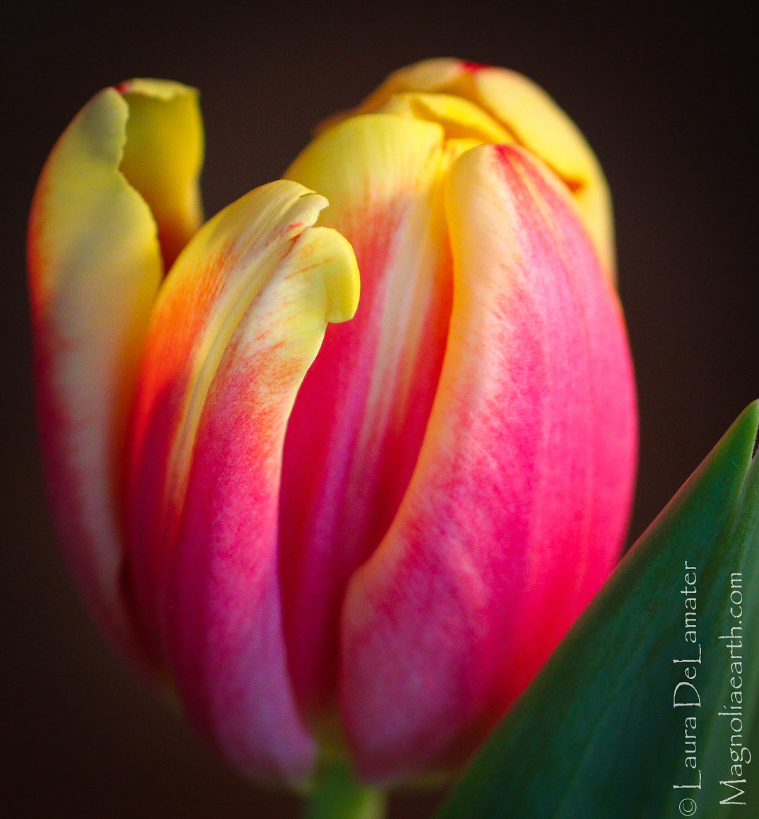 Photograph Countdown to spring! by Laura DeLamater on 500px