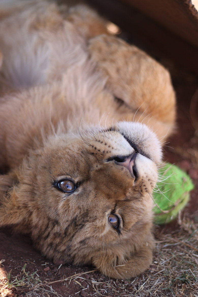 Photograph Cub by James Selwood on 500px