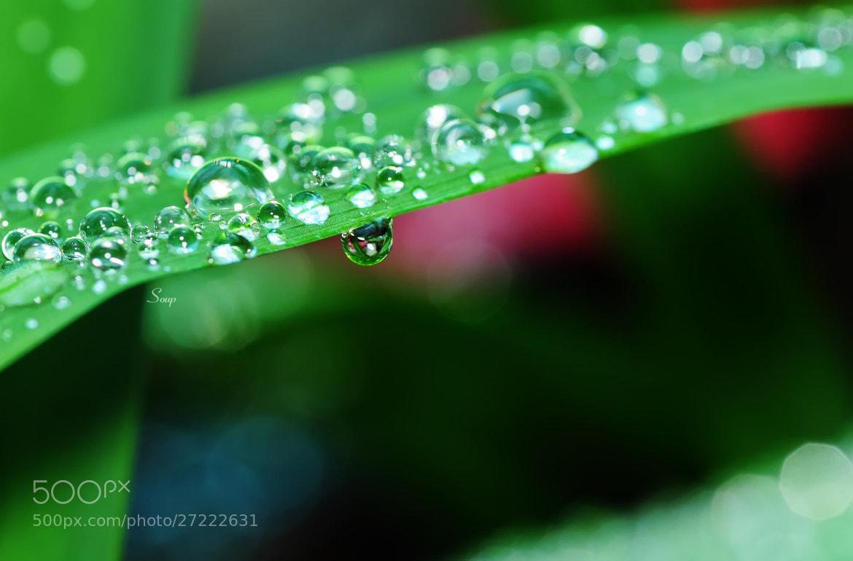Photograph water drops by Pham Huu Binh on 500px
