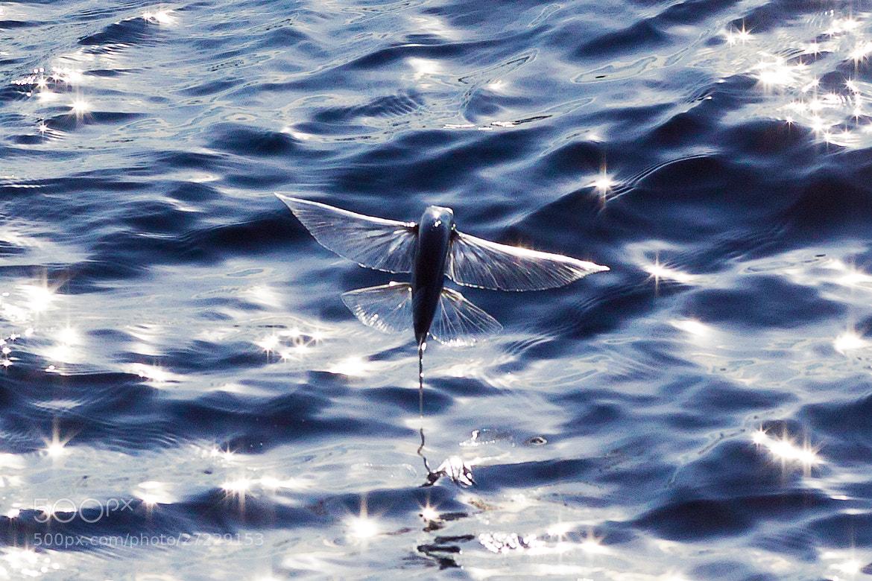 Photograph Glasswing by Tetsuya Okano on 500px