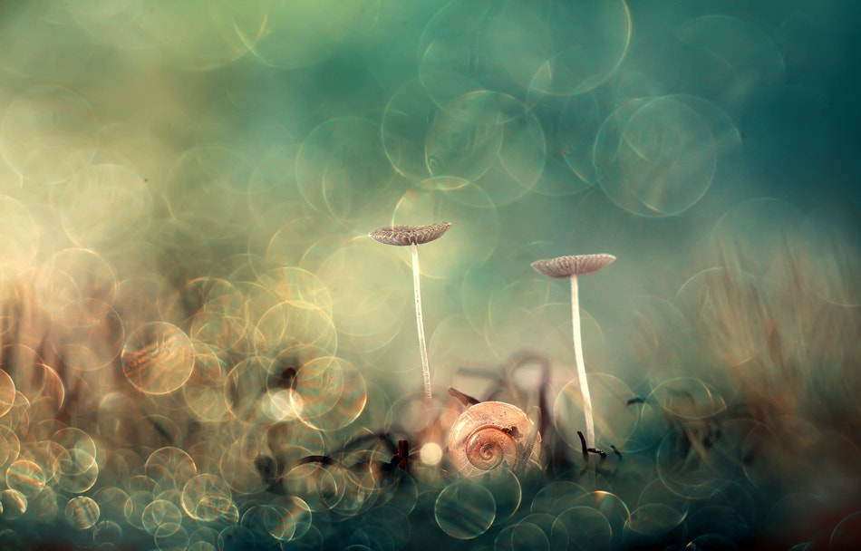 Photograph Dreamland by Andiyan Lutfi on 500px
