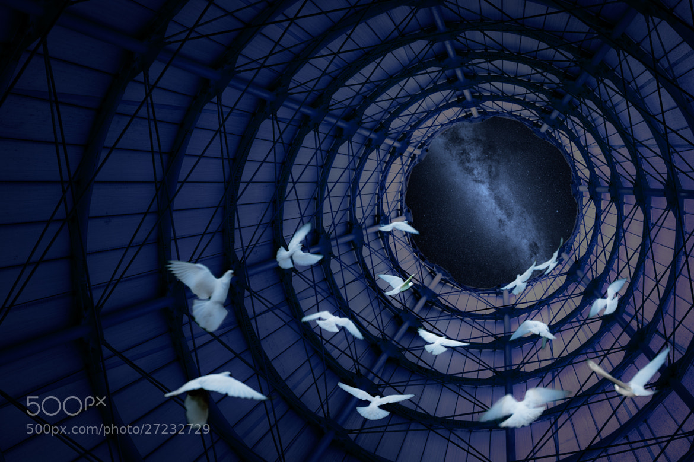 Photograph Doves by Hani Latif Zaloum on 500px