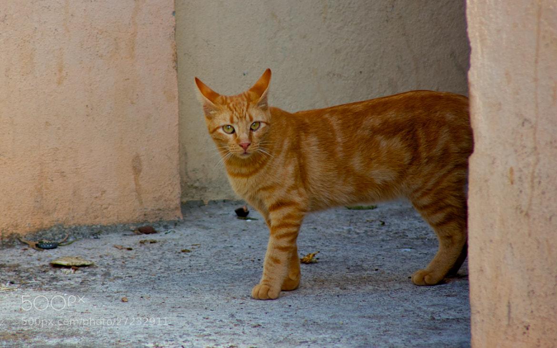Photograph Cat by Giammaria Zanella on 500px