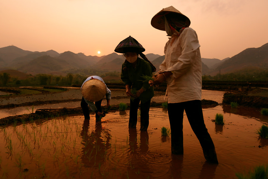 Photograph Rice girls by Mark Podrabinek on 500px