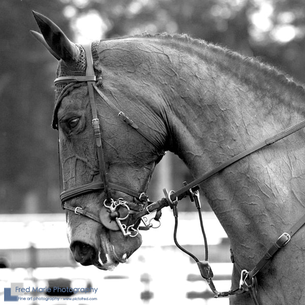 Photograph Horses Close Up series #4 by Fred Marie on 500px