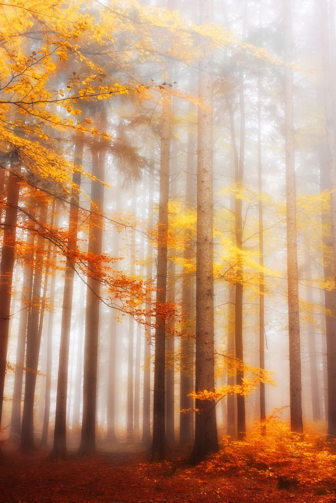 Photograph Colors of fall by Kristjan Rems on 500px
