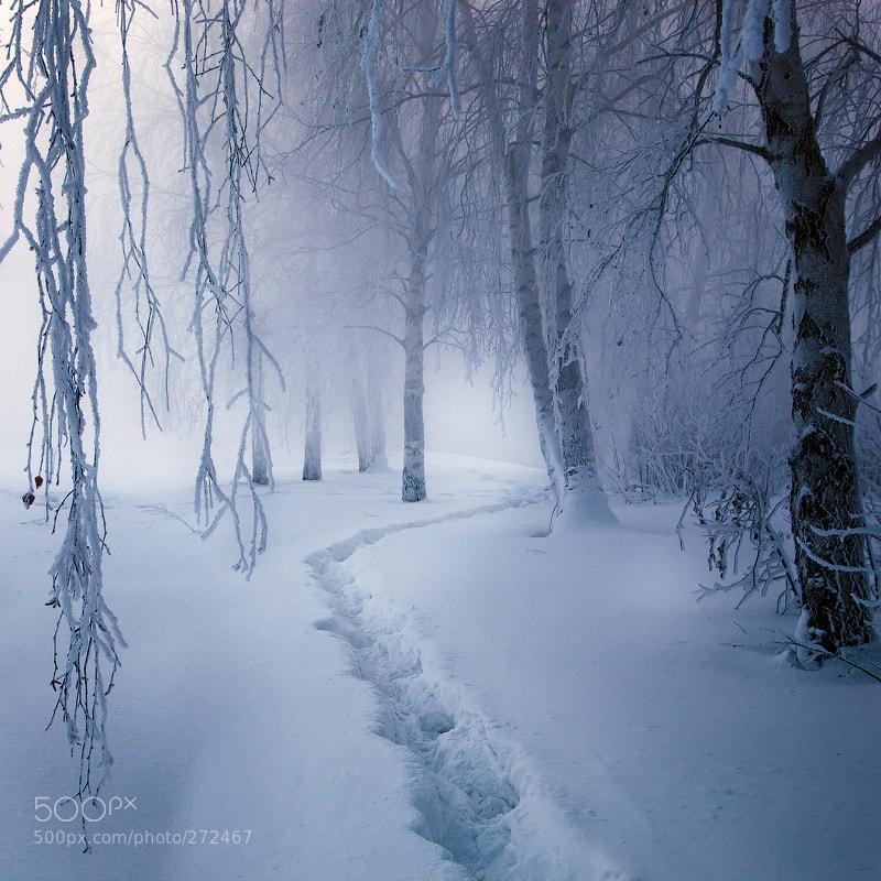 Photograph Magic forest by Alexei Mikhailov on 500px
