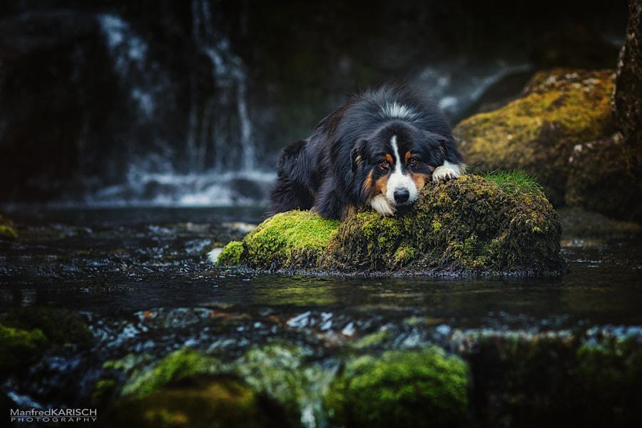 am Wasserfall, автор — Manfred Karisch на 500px.com