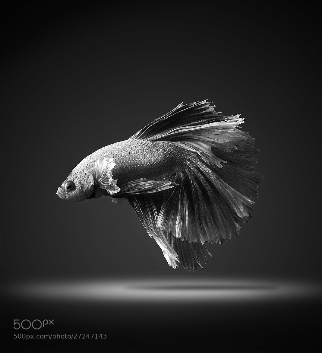 Photograph on stage by visarute angkatavanich on 500px