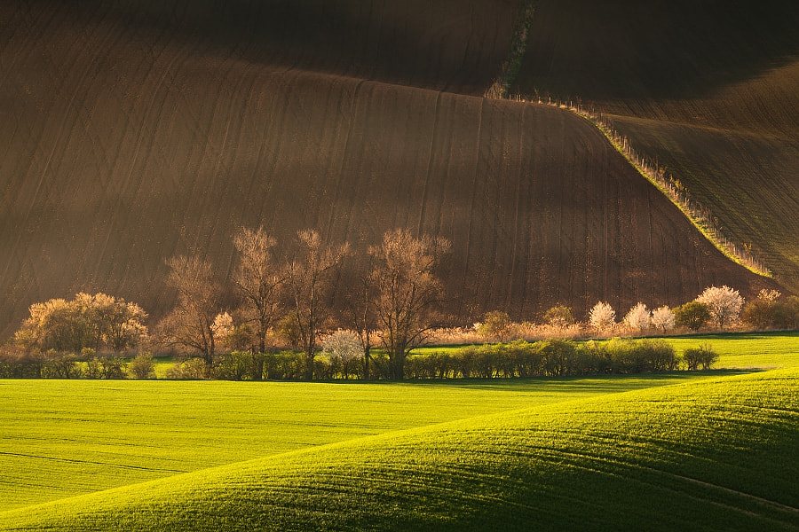 Spring evening at Moravian Slovakia by Daniel Řeřicha on 500px.com
