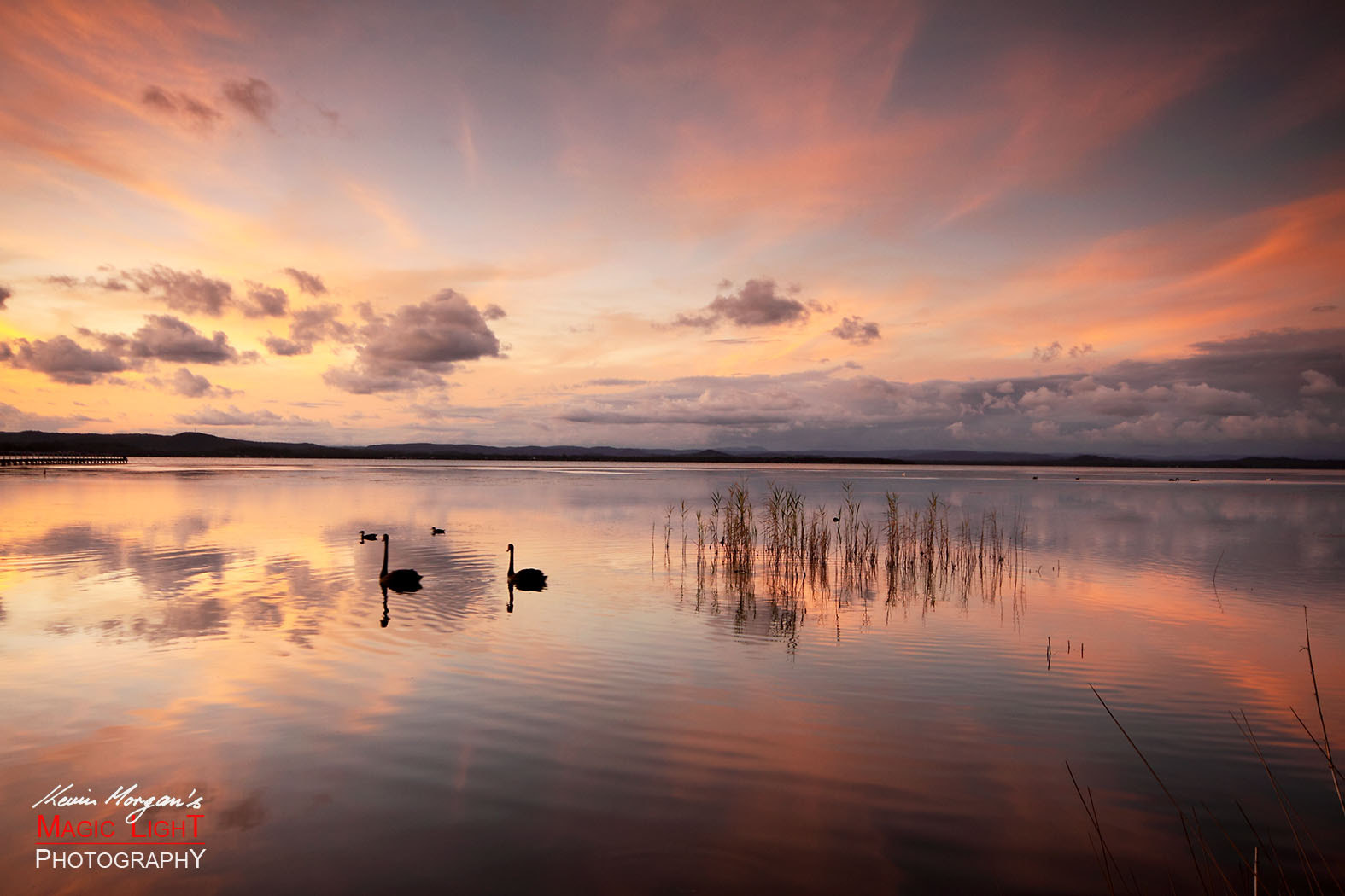 Photograph Swans at Sunset by Kevin Morgan on 500px