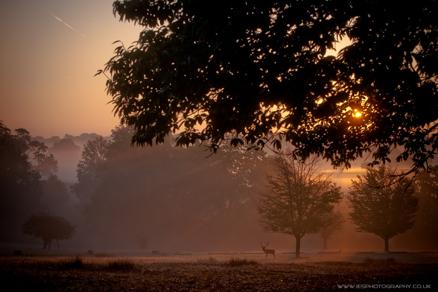 Photograph Autumn Sunrise by Ian Schofield on 500px