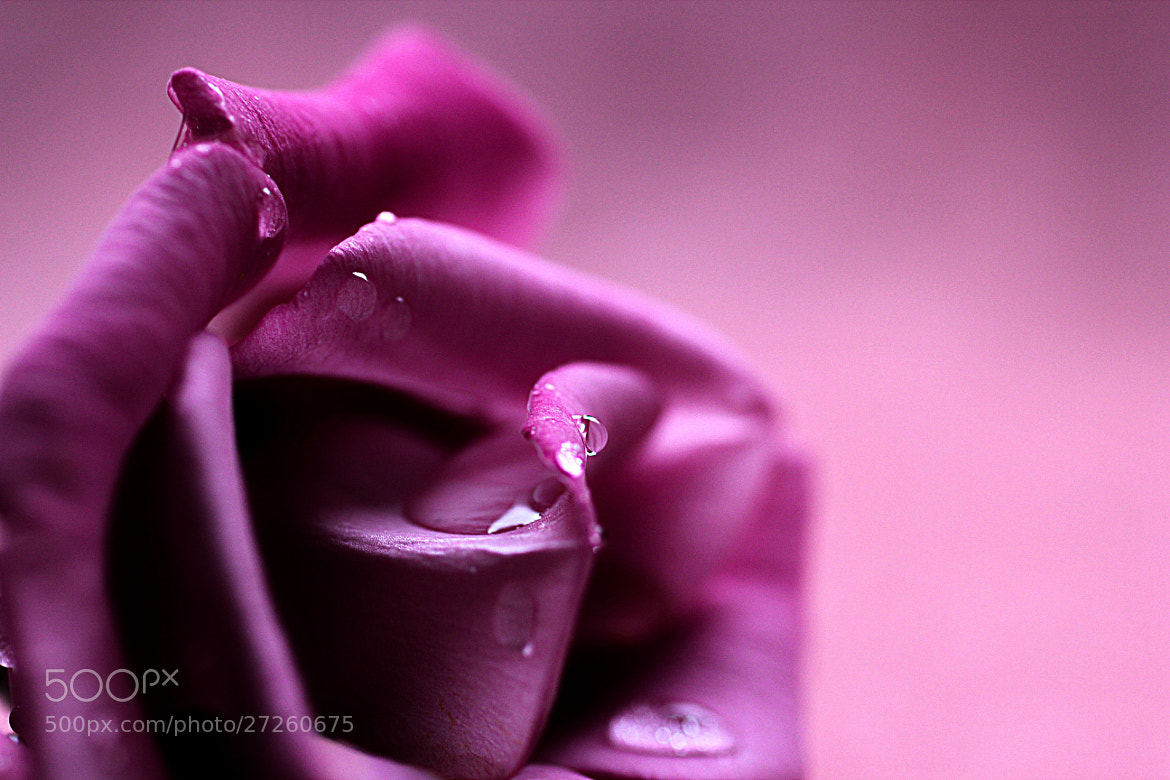 Photograph Pink by Anne Costello on 500px