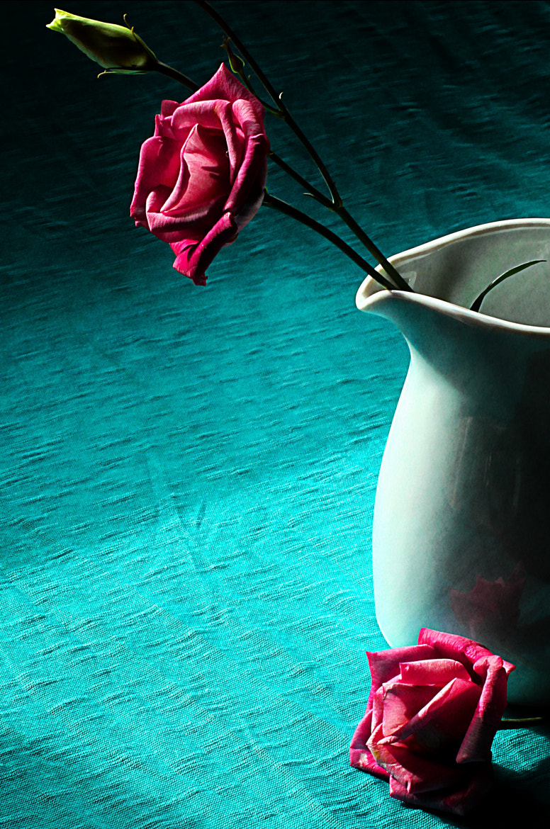 Photograph Roses by Anne Costello on 500px