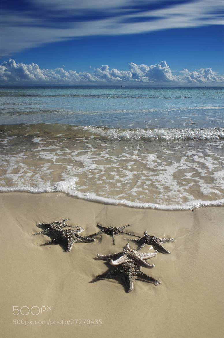 Photograph Tangalooma Starfish by Rhys Pope  on 500px