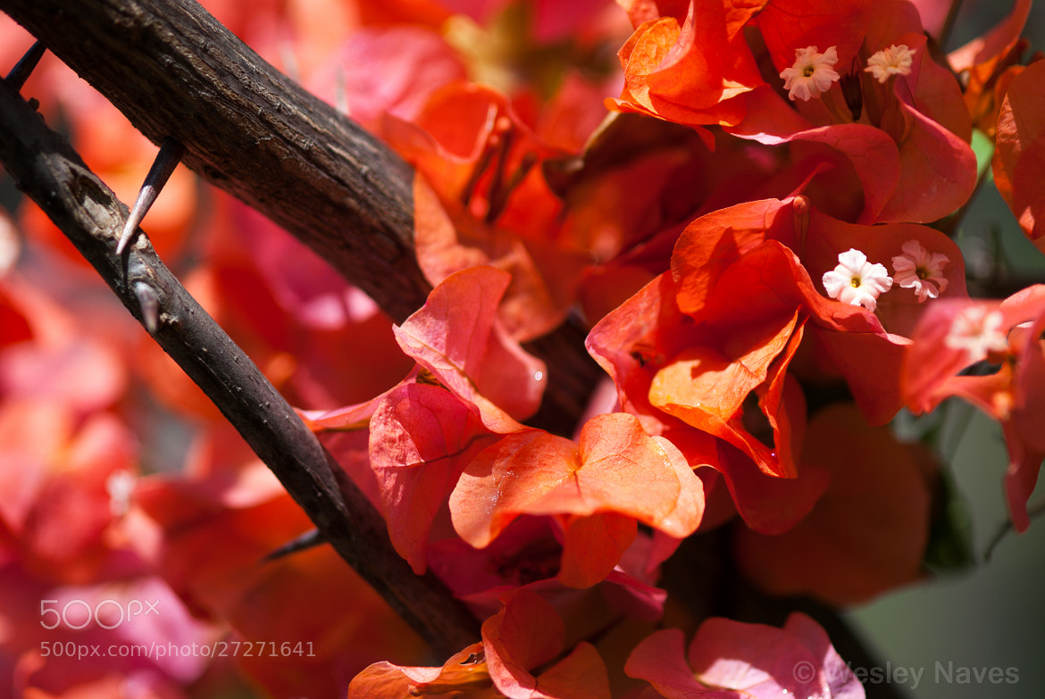 Photograph Red Flowers by Wesley Naves on 500px