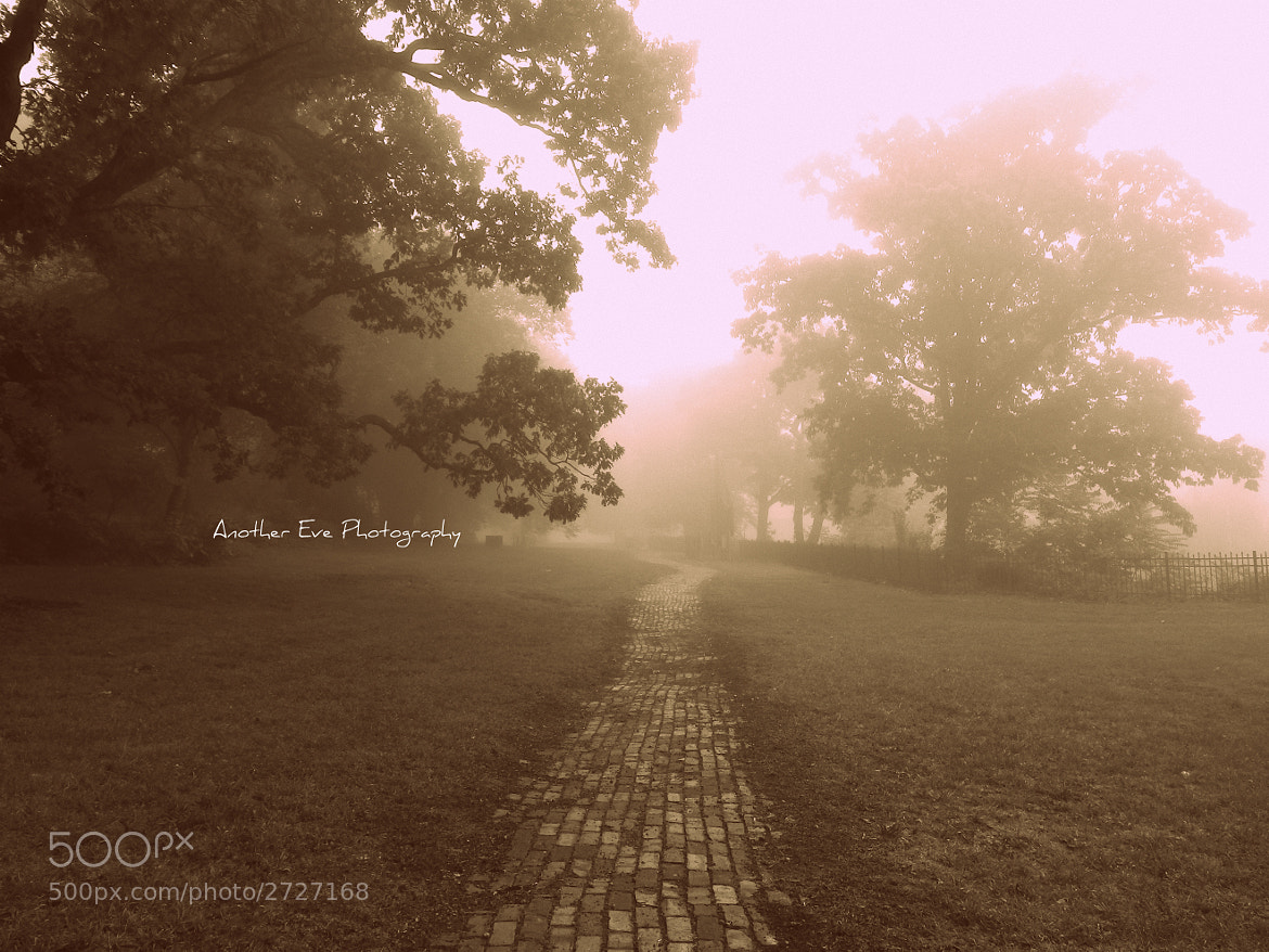Photograph Take this Path by Another Eve on 500px