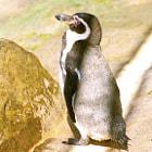 A penguin sunbathing.