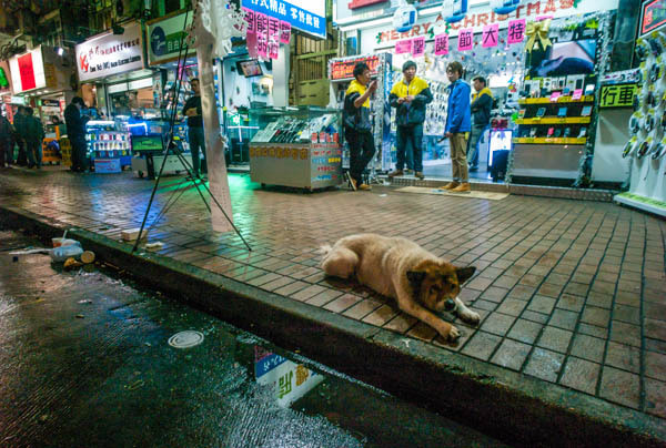 Photograph Stray by Kenneth Chong on 500px