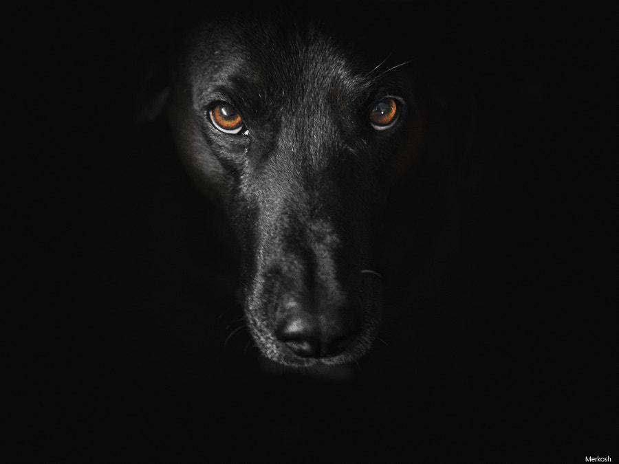 One Dog...black von merkosh auf 500px.com