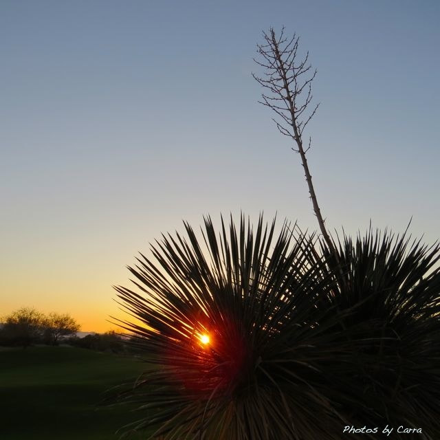 Photograph Yucca sunrise by Carra Riley on 500px