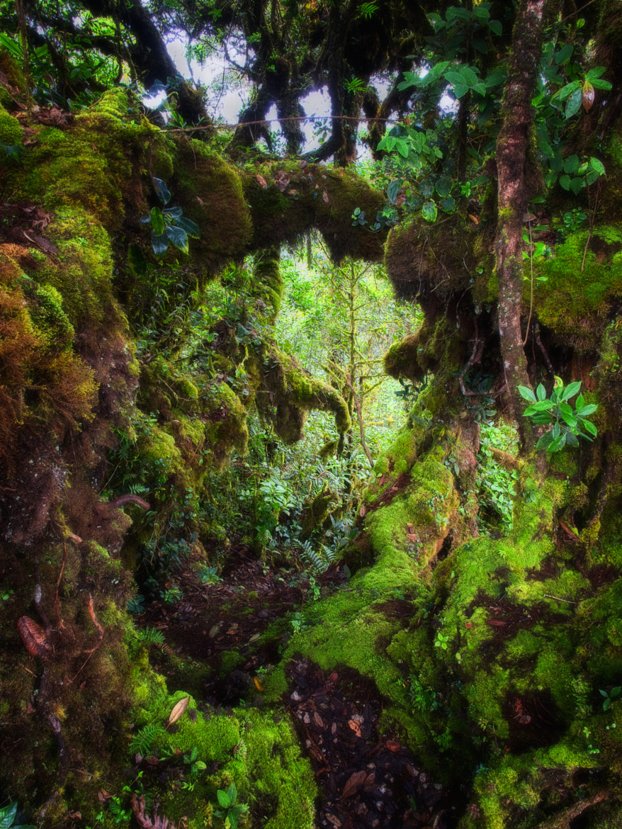 Photograph Mossy Forest Pathway by PaulEmmingsPhotography  on 500px