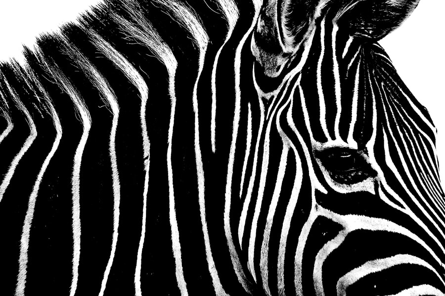 Photograph White and Black in Black and White by Santi Senarat on 500px