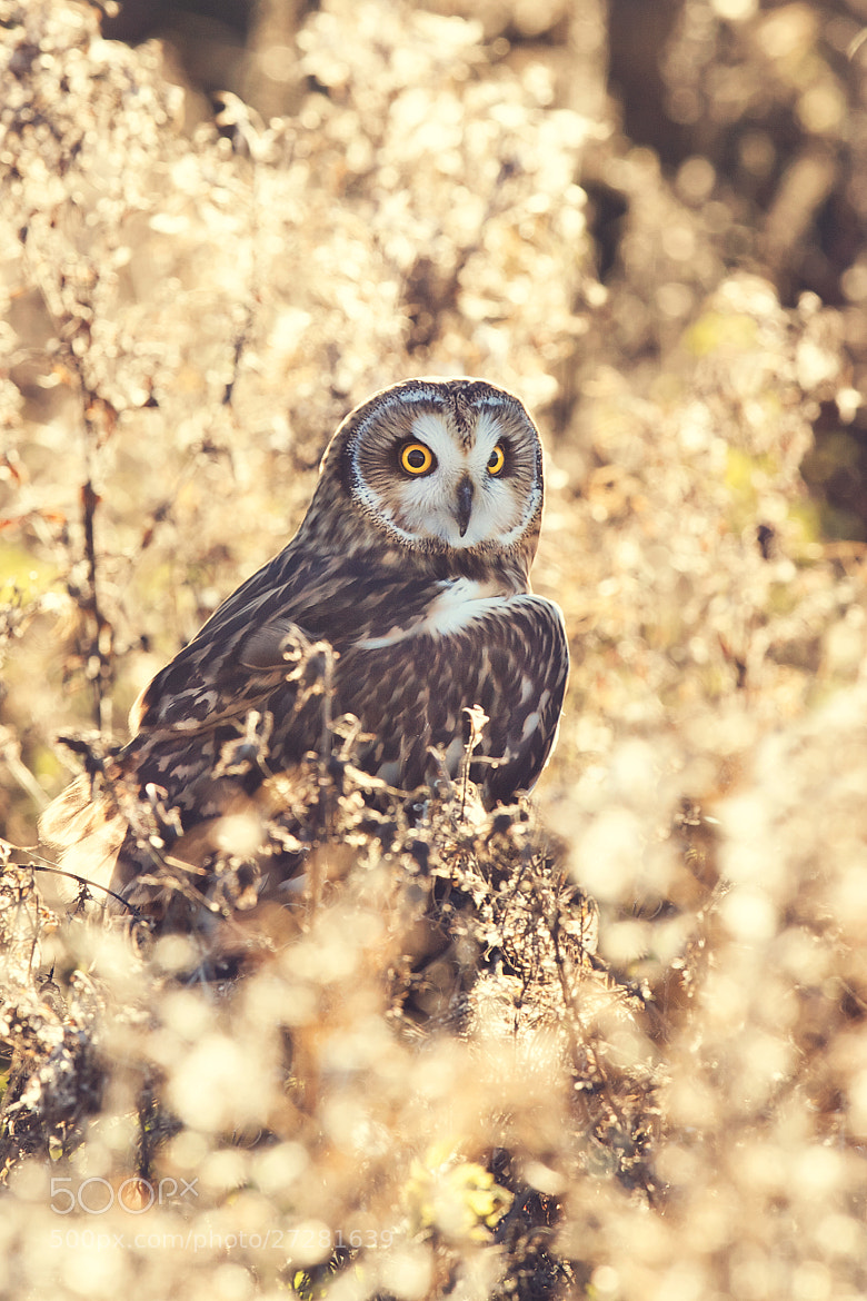 Photograph pastel by Mark Bridger on 500px