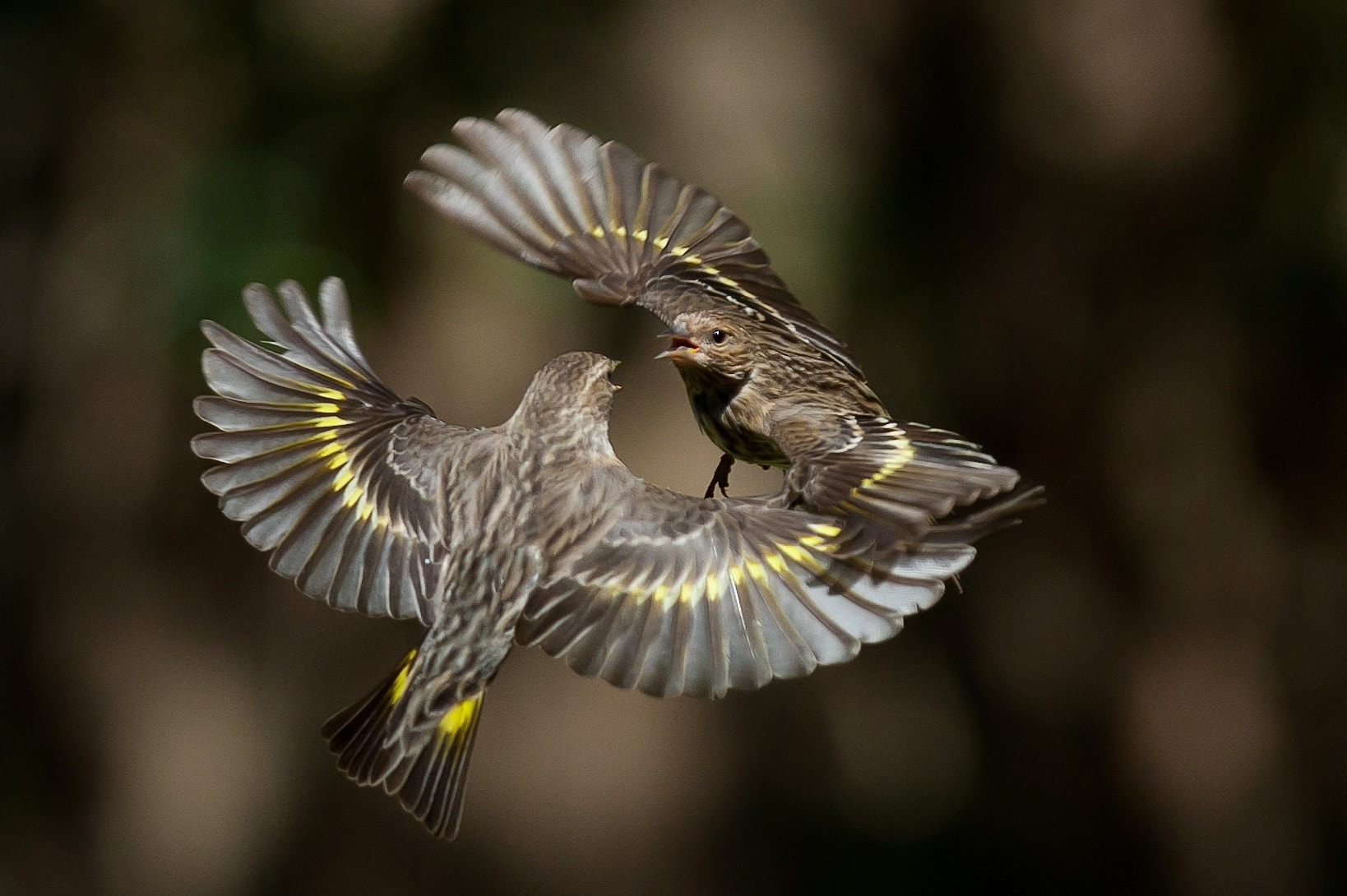Photograph Bird Fight!!! by David Barfield on 500px